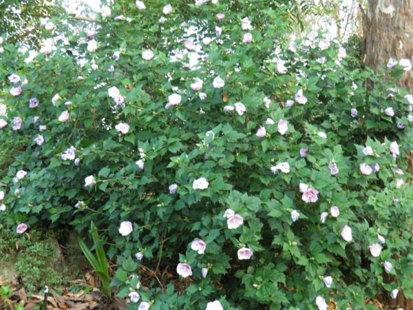 Coucals Garden