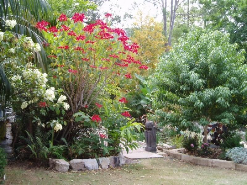 Coucals Garden Trees